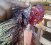 Ajaib, Ayam Jago Tetap Hidup Setelah Disembelih