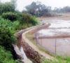 Petani Desa Perapau Terancam Gagal Panen