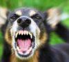 Anjing Berkeliaran, Satu Anak Jadi Korban
