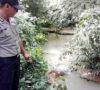2 Hari Menghilang, Hasnawati Ditemukan Mengapung di Sungai