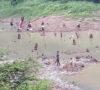 Danau Kering Tempat Warga Cari Ikan