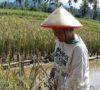 Dinas Pertanian Luncurkan Brigade Proteksi Pertanian