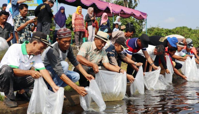 Pemkab Muba Tebar Ratusan Ribu Bibit Ikan Jelawat dan Nilem