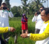 Tim Dinas Pertanian Bersama Petani 'Keroyok' Hama Tikus di Seginim