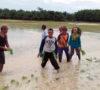 Cetak Sawah Baru, Petani Sanga Desa Butuh Bantuan Pemerintah