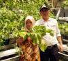 Adang: Kebun Hidroponik Bisa Menunjang Ekonomi Masyarakat