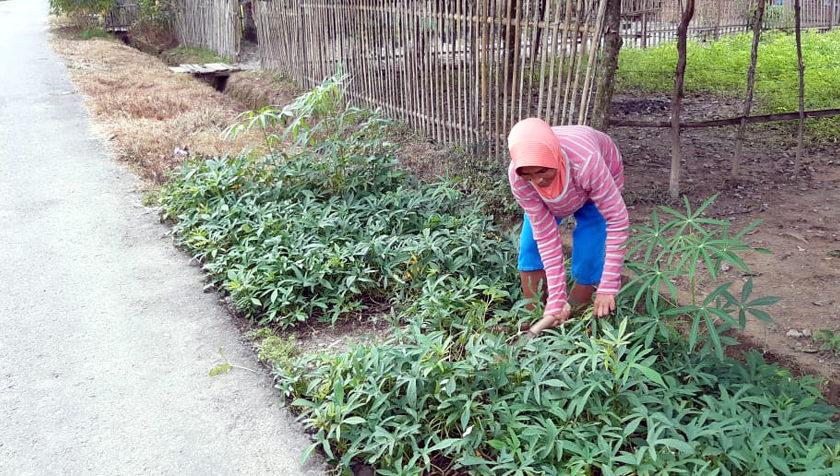 Warga Desa Tanjung Menang Mulai Bercocok Tanam di Pekarangan Rumah