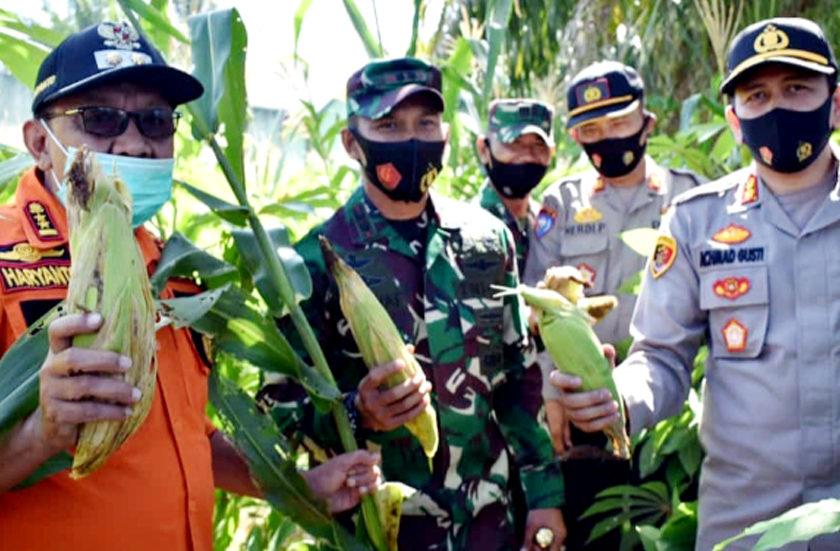 Tingkatkan Ketahanan Pangan Ditengah Pandemi Covid 19, Kodim 0405 Panen Jagung Manis