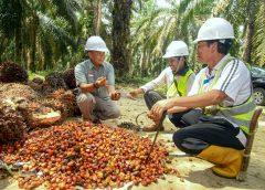 Cargill bekerja sama dengan YIDH akan melatih lebih dari 8.900 petani swadaya melakukan praktik perkebunan yang baik dan prinsip-prinsip keberlanjutan sebagai bagian dari komitmen Cargill untuk pelibatan petani. Cargill telah menjalankan kemitraan serupa dengan 22.000 petani plasma di Sumatera Selatan dan Kalimantan Barat serta akan membawa pengetahuan dan pengalamannya ke dalam inisiatif baru ini.