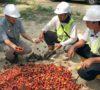 Cargill Dukung Petani Plasma Indonesia