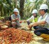 Cargill Tropical Palm dan Yayasan Inisiatif Dagang Hijau (YIDH) Bekerja sama Membantu Petani Sawit Swadaya Indonesia